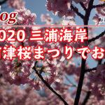 三浦海岸 河津桜 2020